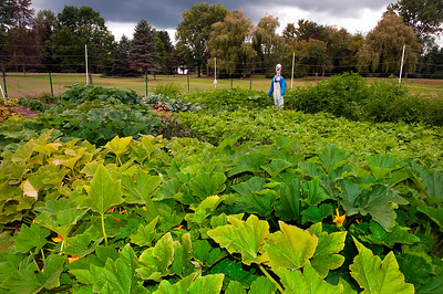 20140912 ABVM Garden-1402 darkened levels v2