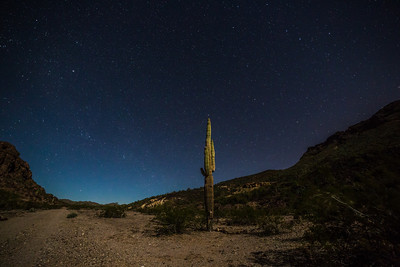 Taken about 3:30am while finding setup for last time-lapse. North star is right at the top of that saguaro... would have been a great time lapse but opted for another shot up the hill to the left.
