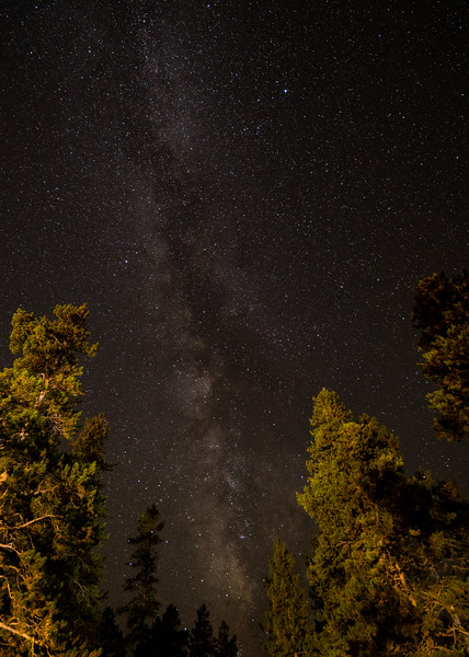 Frankieboy Photography |  Milky Way And Trees Astrophotography | Estes Park Colorado