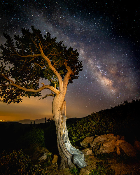 Milkyway Bristlecone Pine | Mt. Evans Wilderness, Colorado