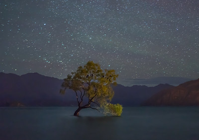 The Wanaka Tree At Night | Wanaka New Zealand