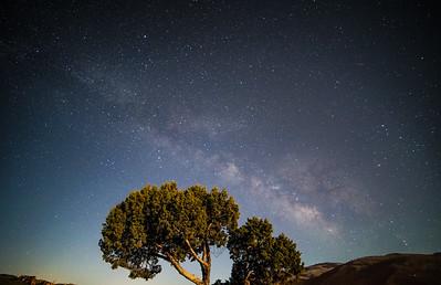 Galactic Core Tree
