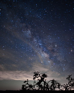 Old Tree & Milky Way