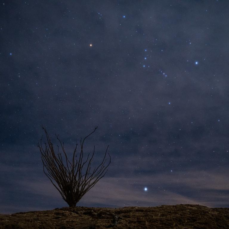 Orion, Sirius, and Ocotillo Bush