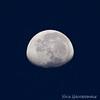 Blue Morning Moon