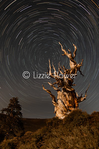 Ancient Bristlecone Star Trails