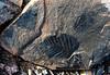 Corylites Fossil, Svalbard, Norway