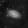 M81 - Luminance