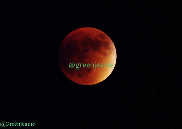 Harvest Moon ~  Lunar Eclipse-2015