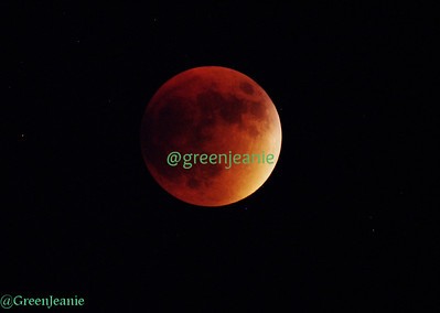 Harvest Moon ~  Lunar Eclipse-2015