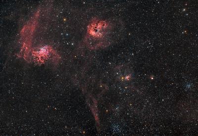 Flaming Star, Tadpoles,Starfish and Pinwheel
