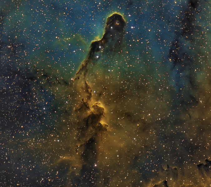 Elephant's Trunk Nebula in IC1396. Done in Hubble palette with narrowband filters to highlight emissions of Hydrogen, ionized Sulphur and ionized Oxygen.  Ha binned 1x1 12x20m, SII binned 2x2 10x30m, OIII binned 2x2 10x 30m. Total of 14 hours of exposure. Taken by Lynn Hilborn WhistleStop Obs,Grafton, Ontario in July 2011.<br />  Editors' Choice Sky&Telescope magazine Photo Gallery.<br /> TEC 140 @f5.6 and FLI ML 8300 camera with Baader filters, Tak NJP mount.