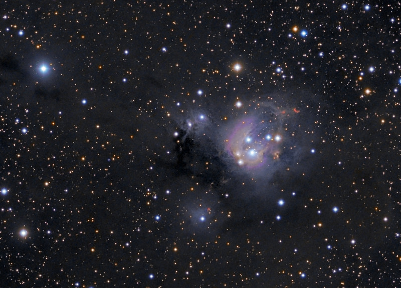 NGC 7129 crop....TEC140 @f7 and FLI ML8300 camera on Tak NJP mount.  Lum 1x1 21x10m RGB 2x2 each 21x5m.<br /> 9 hours of exposure.  Taken by Lynn Hilborn, WhistleStop Obs, Grafton, Ontario on July 1,3,5,2011<br /> <br /> NGC 7129 (NGC 7133)   text with permission of Robert Gendler<br /> Distance 3300 light years<br /> Right Ascension: 21 : 41.3 (hours : minutes)<br /> Declination: +66 : 06 (degrees : minutes)<br /> NGC 7129 is a young compact star forming region which displays an unusual patchwork of colorful nebulosity and bright stars contrasted against the dust clouds of the Milky Way. The astronomical correlate of those colors and textures is the rich interplay that occurs between young stars and the surrounding interstellar medium. NGC 7129 contains several bright reflection nebulae including the large blue reflection cloud NGC 7133 and the unusual small yellow reflection cloud LBN497. Also conspicuous in the field are several bright Herbig-Haro objects, the signatures of young stellar objects soon to emerge in the main sequence. The dominant blue reflection nebula, NGC 7133 is illuminated by two young B-type stars BD +65°1637 and BD +65°1638. Both stars are less than one million years old and represent the core of NGC 7129, a small cluster of low mass stars which populate the 36 light year wide cavity. BD +65°1638 is the older of the two illuminating stars and has played a critical role in the formation of NGC 7129. Around 100,000 years ago the ultraviolet radiation field from the young star began to burrow a cavity into the surface of a nearby molecular cloud. As the cavity expanded, a ridge like interface formed where the expanding cavity contacted the molecular cloud, triggering an intense period of contained star formation. The bright stars went on to illuminate the ambient dust surrounding the cluster, forming the brilliant reflection clouds we see now.<br /> The environment of NGC 7129 is a fertile star forming region where numerous young young stellar objects (YSOs) exist. Energetic outflows from several young protostars are the power source for several Herbig-Haro objects which populate the ridge along its northeast and southwest regions. These objects take their name from George Herbig and Guillermo Haro who first described them over 50 years ago. Today over 300 individual HH objects are known. These fascinating objects form when an energetic outflow from an infant star ionizes adjacent gas clouds in the slightly denser interstellar medium. The nascent stars are invisible optically but reveal their presence when they release highly collimated jets of ionized plasma which shock the surrounding interstellar medium. The shocked gases form a small compact emission cloud called a Herbig-Haro object (HH). Typically HH objects are found in active star forming regions. Today well over 300 individual HH objects are known in our galaxy.<br /> <br />  Although NGC 7129 is quite impressive at optical wavelengths, over 50% of the cluster stars are highly obscured young stellar objects, only detectable at infrared wavelengths. Cloaked by dense envelopes of dust and gas that characterize their early evolutionary stage as they contract towards the main sequence, they are mostly invisible at optical wavelengths. There are two major outflow sources within NGC 7129 that likely power many of the prominent Herbig-Haro objects. One source is an imbedded protostar adjacent to the unusual Herbig Be star LkH 234, a highly evolved pre-main sequence star located along the northern ridge. Herbig Ae/Be stars are intermediate mass pre-main-sequence stars analogous to their lower mass counterpart, the T-Tauri stars. An outflow of molecular gas arises from a source very close to LkH 234 and extends out some 26 light years along the ridge and into the cavity, powering several prominent Herbig Haro objects lying nearby to the northeast including HH 105, GGD 34, and GGD 35. The second major outflow source is located along the southern ridge and is known as FIRS 2. This protostellar system is likely the power source of the Herbig-Haro objects in the southwest of the complex, namely GGD 32 and the largest Herbig-Haro object in NGC 7129, HH 103. The ages of the cavity and protostellar objects within NGC 7129 seem to coincide and are about 100,000 years old.