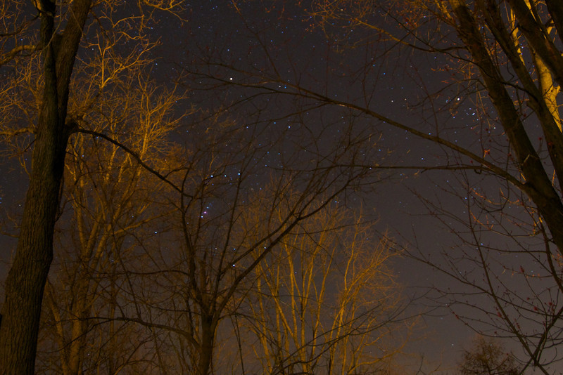 View of Orion from my parent's back patio.