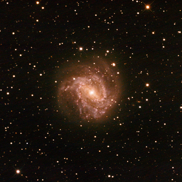 M83 - NGC5236 - Southern Pinwheel Galaxy - 11/2/2021 (Processed cropped stack)