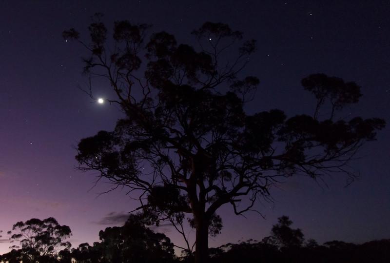 The Moon, Venus and Jupiter Tree - 22/5/2015 (Processed image)