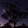 Moon and Venus in Tree