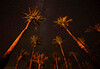 Date Palm Grove with Milky Way and Andromeda Galaxy