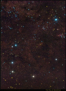 The Tail of Scorpius