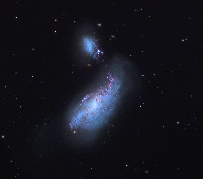 "NGC4490 (lower) and NGC4485 (upper) colliding galaxies, also known as Herschel H197-1 and H198-1 respectively.  The pair are in the Arp catalog of ""peculiar galaxies"" as Arp 269, a bridging galaxy duo. 32 inch Schulman telescope with STX camera on Mt. Lemmon, AZ.  Data capture and reduction by Adam Block, University of Arizona.  LRGB processing by JDS using CCDStack and Photoshop CS6."