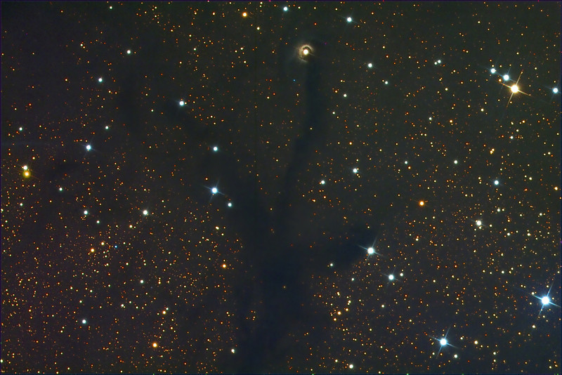V1331Cyg (top center), a T Tauri protostar with circumstellar disk,  and adjacent large dark nebula.  Schulman Foundation 24 inch telescope on Mt. Lemmon, AZ.  Data frames, calibration, and registration by Adam Block.  RGB color conversion and processing in Maxim DL and Photoshop CS3 by JDS.