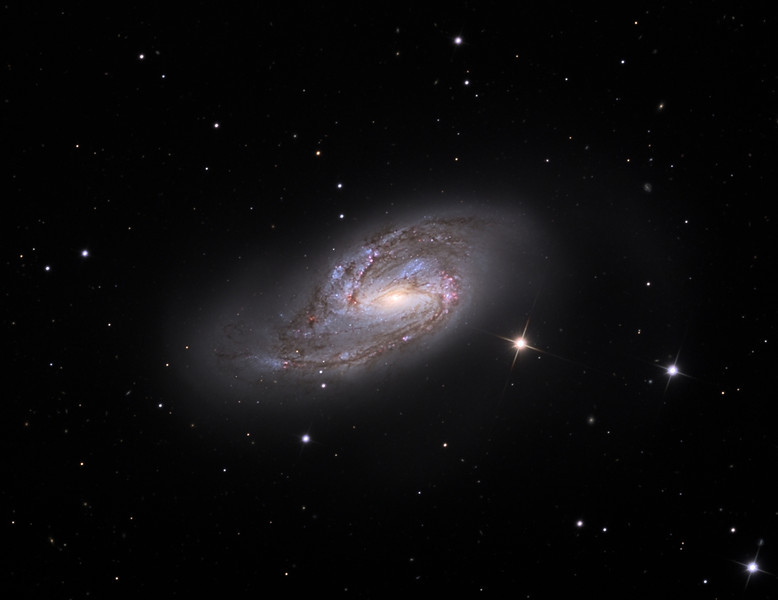 Messier 66 spiral galaxy.  32 inch Schulman telescope with STX camera on Mt. Lemmon, AZ.  Data capture and reduction by Adam Block, University of Arizona.  LLRGB processing with DDP by JDS using CCDStack, and Photoshop CS5.  In memory of Jon D. King.