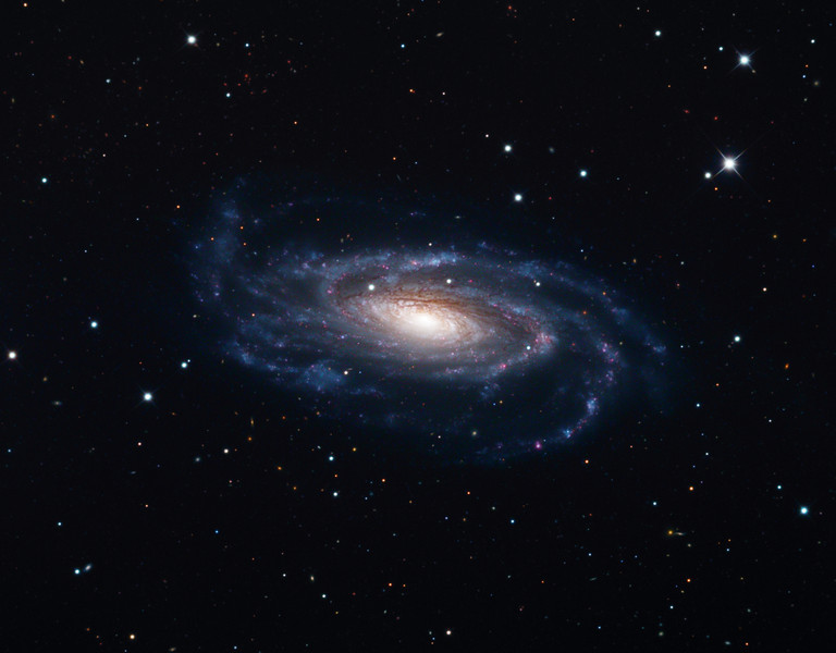 NGC5033 spiral galaxy.  32 inch Schulman telescope with STX camera on Mt. Lemmon, AZ.  Data capture and reduction by Adam Block, University of Arizona.  LRGB processing by JDS using CCDStack and Photoshop.
