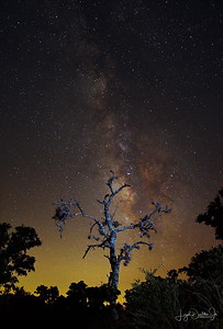 D500_EchantedRock_DeadTree_MilkyWay_9-11-17_7436-2_stitch