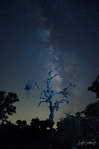 D500_EchantedRock_DeadTree_MilkyWay_9-11-17_7439-1