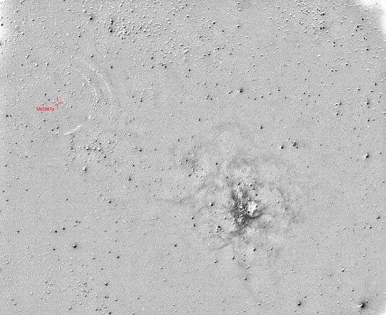 Amateur Detection of the Light Echoes from Supernova 1987a