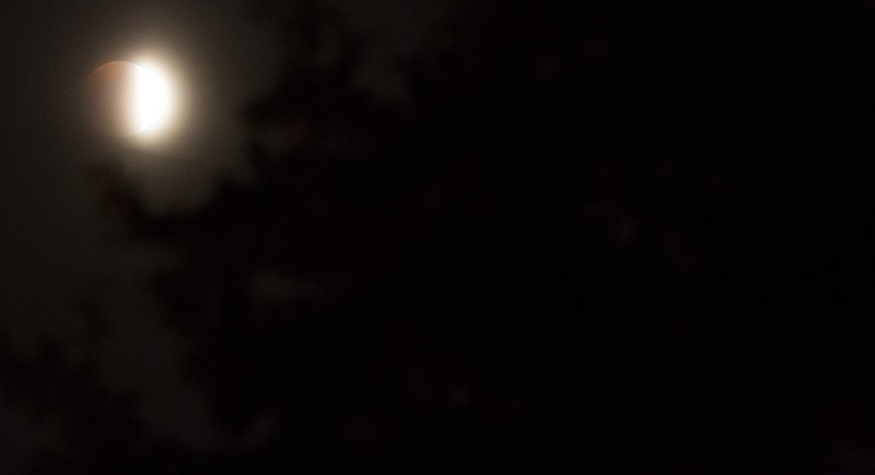 Lunar Eclipse through the trees. The sky was hazy at first.