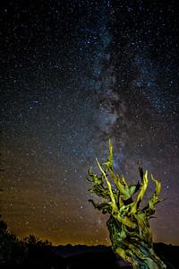 Bristlecone Pine Milky Way