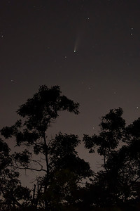 Comet NEOWISE over the Albany Pine Bush