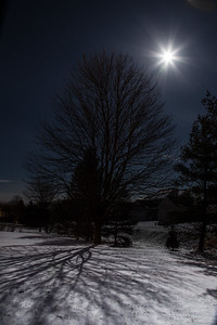 ash tree in back yard casting shadow in light of full moon