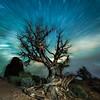 The Martical Tree Vortex