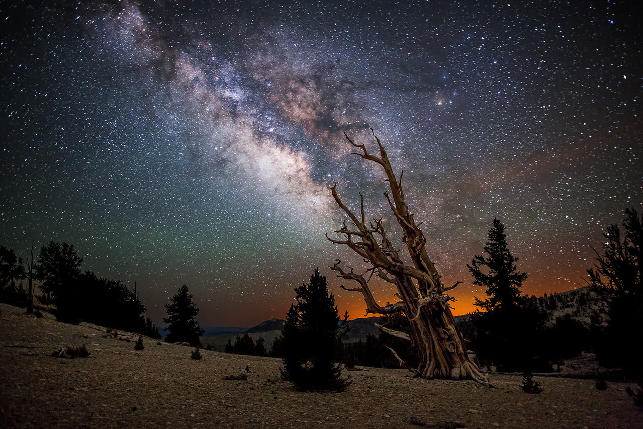 Bristlecone Milky Way