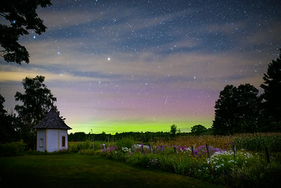 Aurora at Muster Field Farm