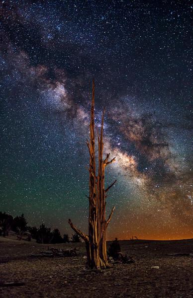 Bristlecone Milky Way