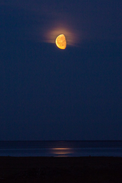 Golden Arctic Moon
