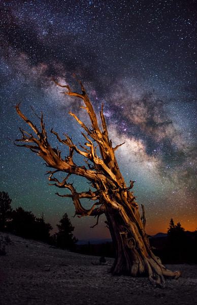 Milky Way at the Bristlecone Pine Forest