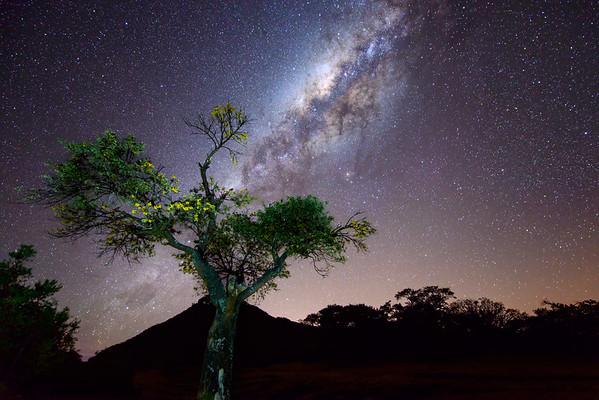 Tree and Milky Way