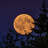 Lynnwood Moonrise