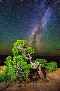 Juniper Bonsai Milky Way, Canyonlands National Park
