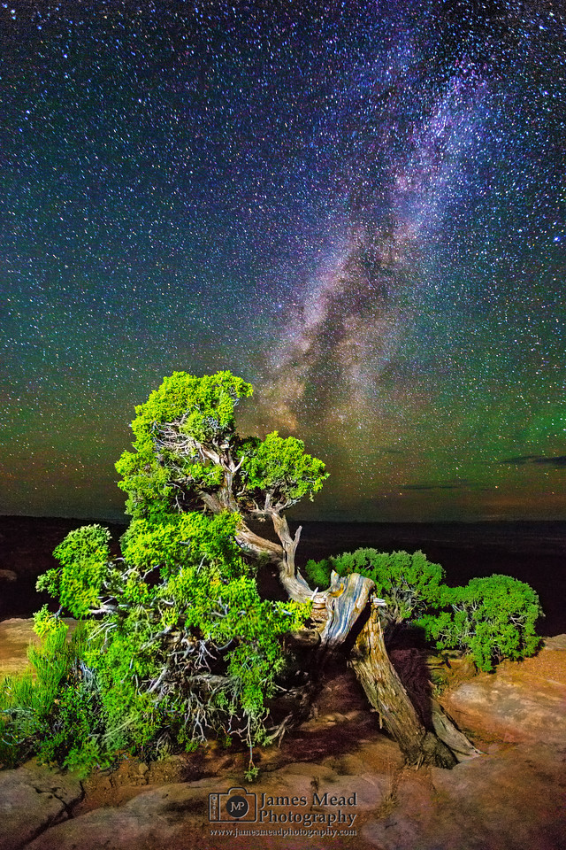 Juniper Bonsai Milky Way, Canyonlands National Park