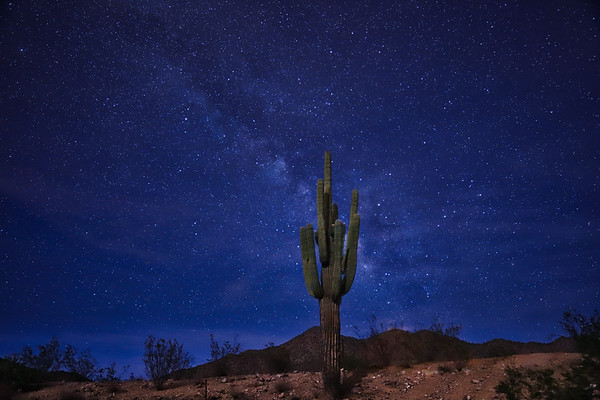 Saguaro and the Stars