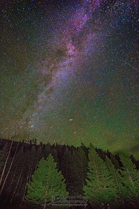 The Milky Way over Longpole Pines, Yellowstone National Park