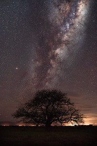 A tree, some cows and a whole heap of stars... full disclosure, this is a composite as I couldn't get the right composition but both images were taken on the same night.
