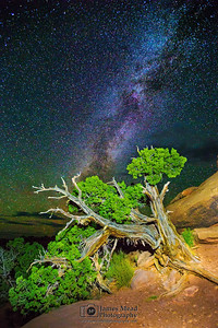 Slopes, Trees and Stars, Canyonlands National Park