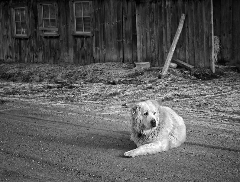 Guarding the Barn