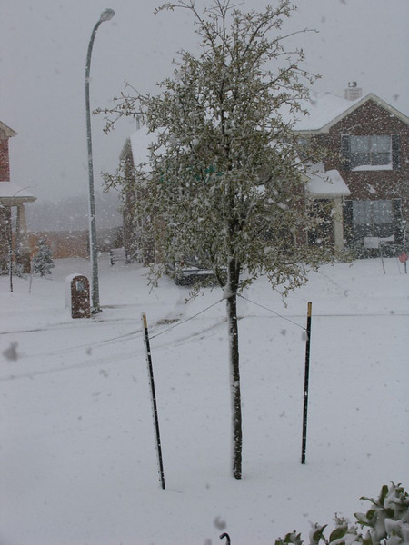Snow fell in Texas in March '08. This is from the front of the house.